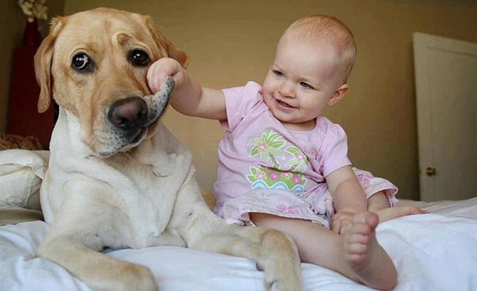 Prevención de las mordeduras de perro