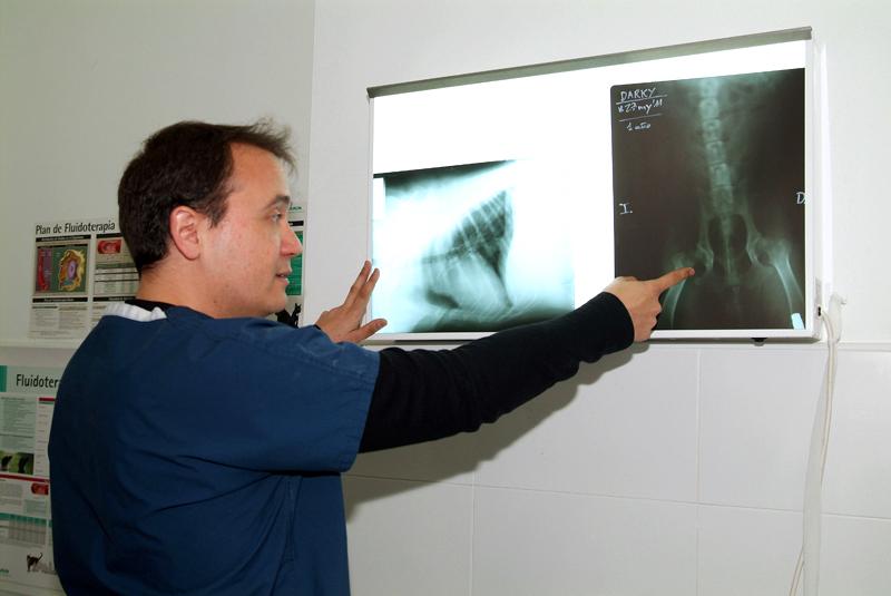 Diagnostico Veterinario por Imagen en Aluche