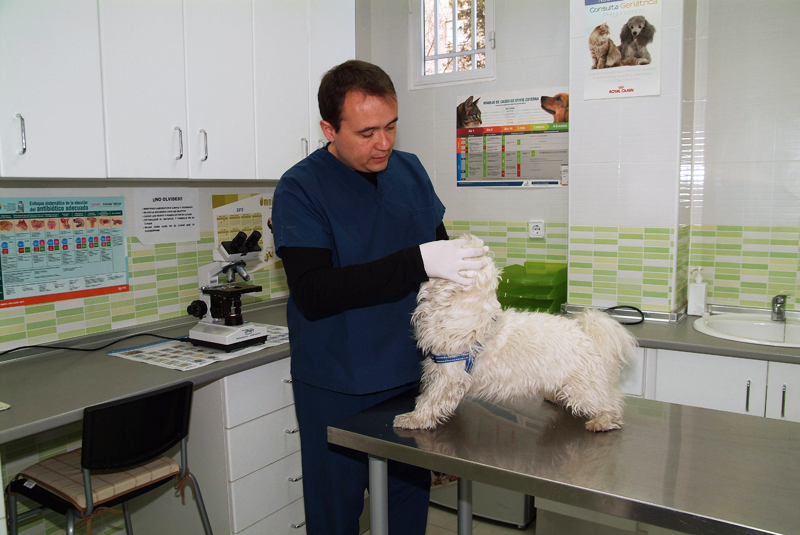 Clinica Veterinaria Aluche